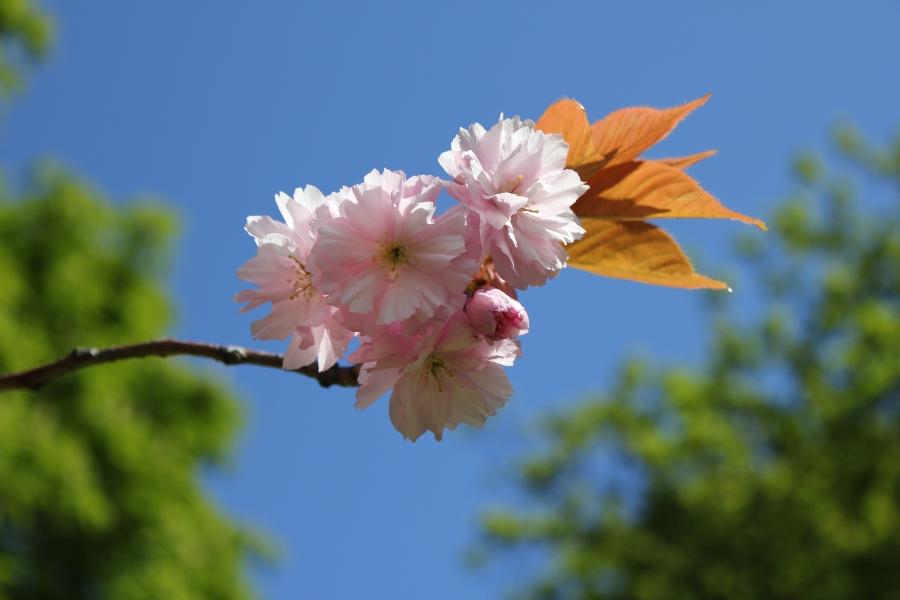 It's a flower!!