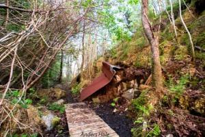 Almighty boardwalk in the woods