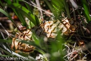 Cone in grass