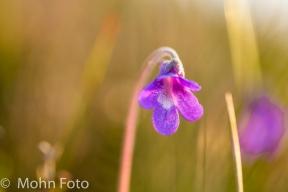 PurpleBell