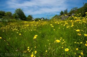 BreivikVegen Flower Meadow