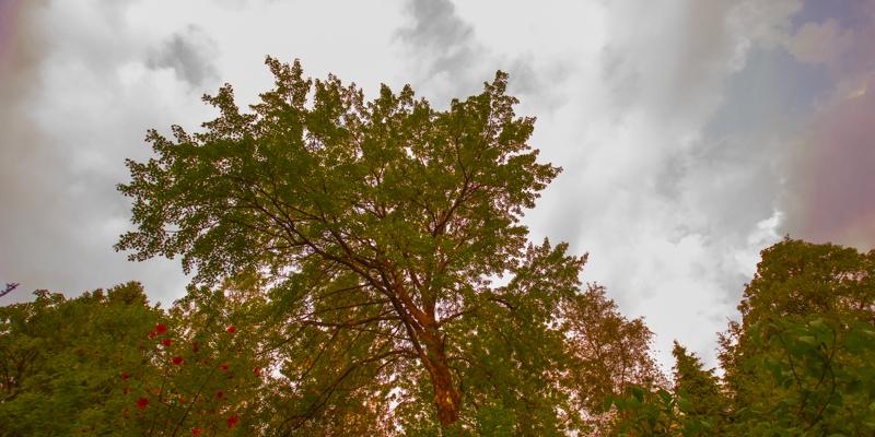 TreesAgainstSky