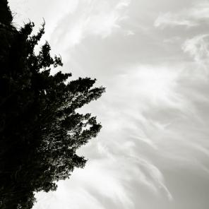 Bush&Sky