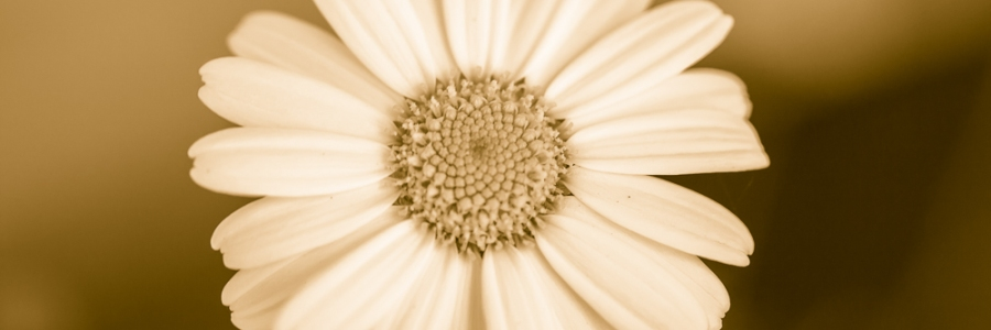 Flower B&W