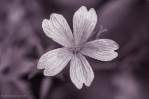 FlowerB&W