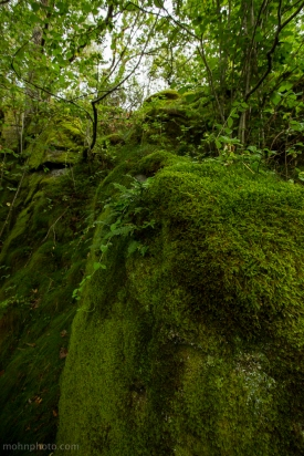 Moss Covered