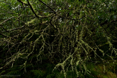 Moss Covered Branches