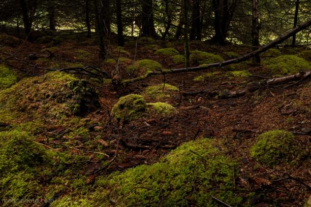 Skogbunnen