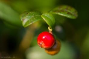 Cranberry mirrored
