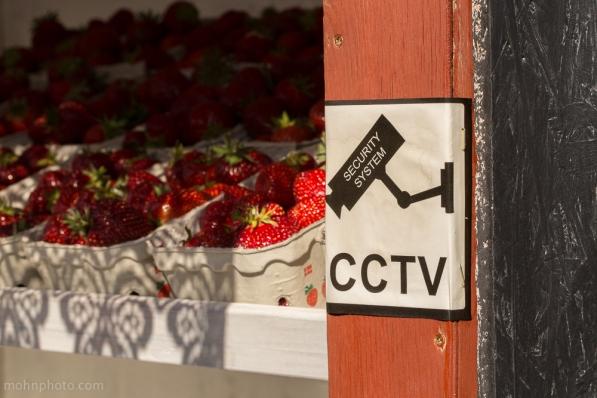 CCTVJordbaer