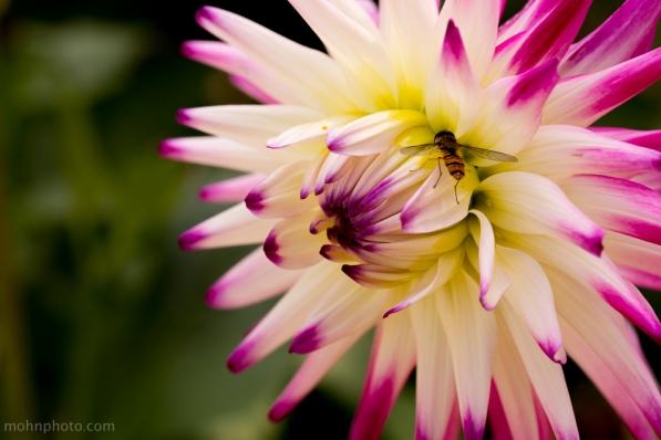 BlomstPåSida