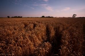 GrainPatterns