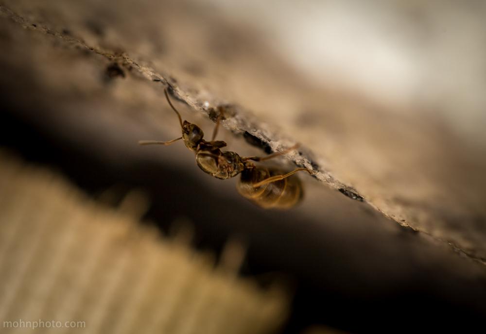Macro Photo Ant