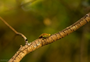 Moss On Branch