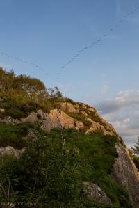 Canada Goose Formation