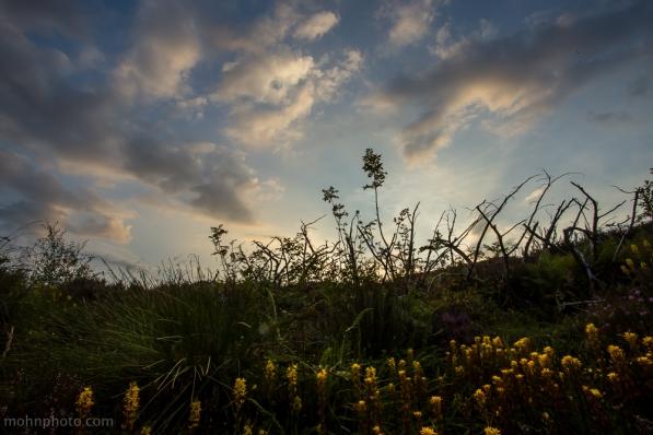 Flowers & Sky