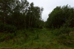 Forrest Path Foldnes