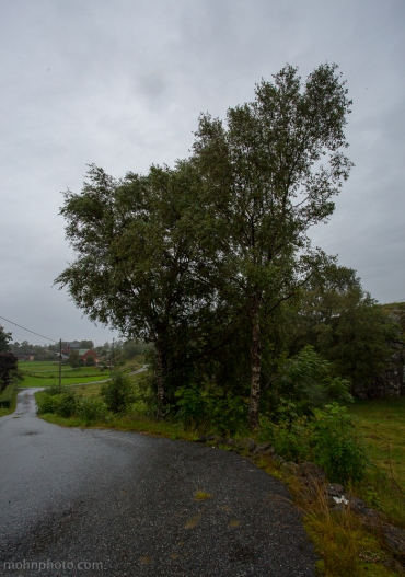 Tree & Road Foldnes