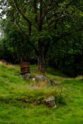 Barrel & Tree