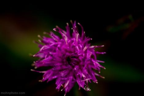 Honning Blomst