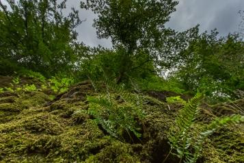 Moss Covered Hillside Gravdal Laksevåg