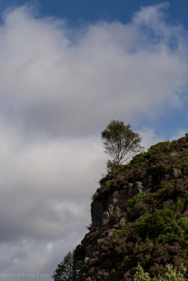 Photo of a tree on a hilltop