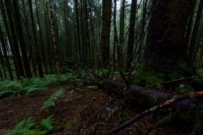 Ground in pine forrest