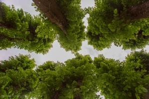 Alvøen Trær