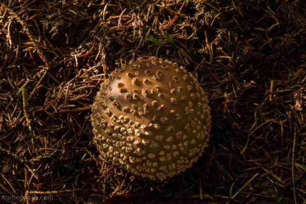 Cool Mushroom