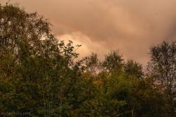 Foldnes-Woods-RognTrær