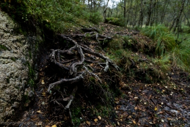 More Roots...