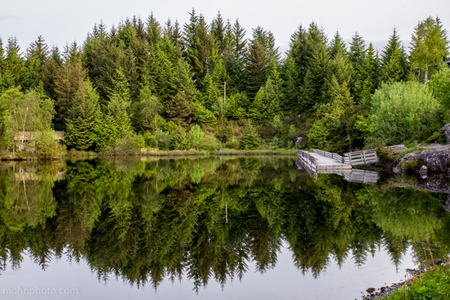 Reflections of a Forrest