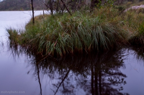 Long Exposure Grass