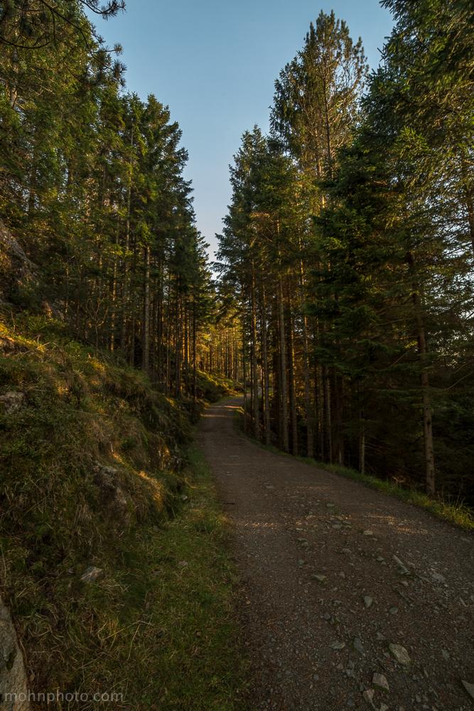 Path Along Pine