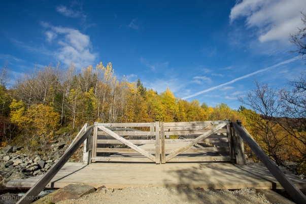 Birches in Background