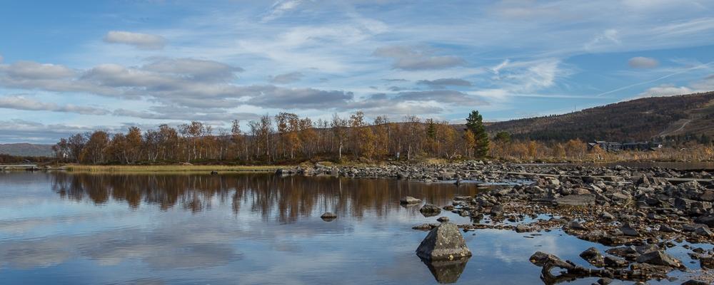 Birches&Reflection