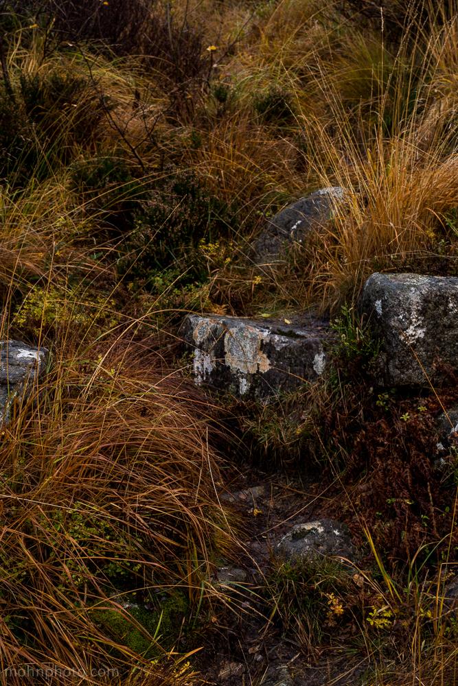 Grass & Rocks