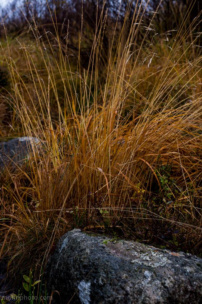 Grass & Rock