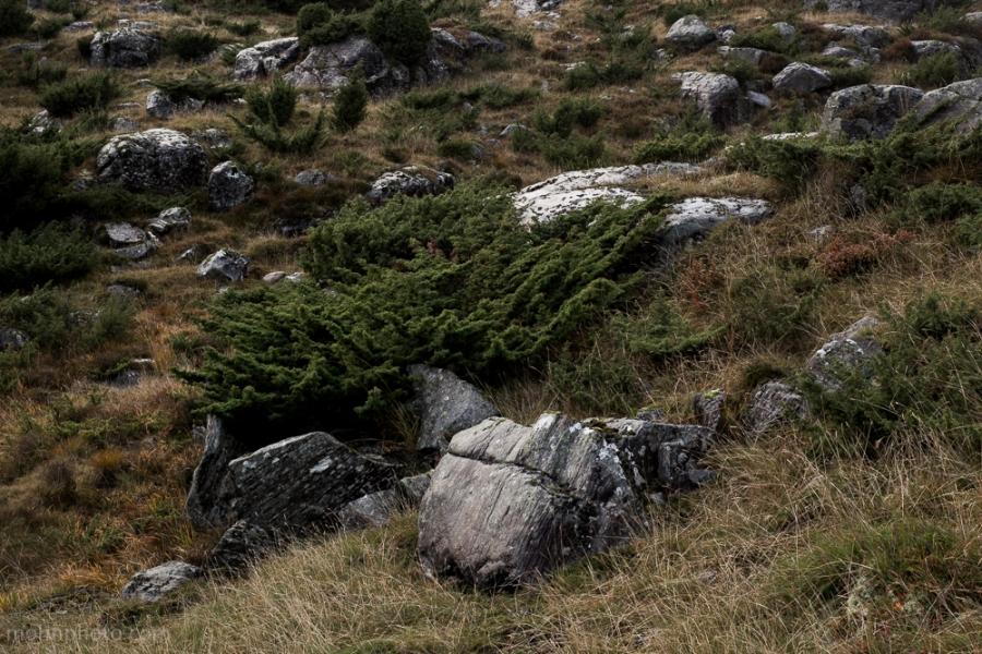 Bregne & Rocks