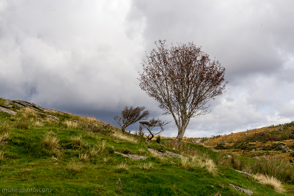 Tree & Gray Clouds