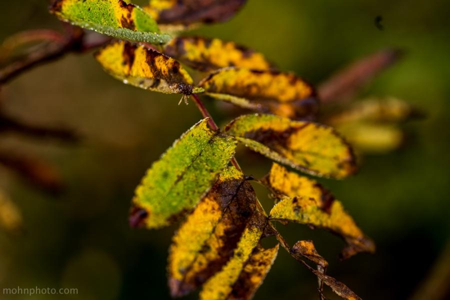 Bigger Leaves