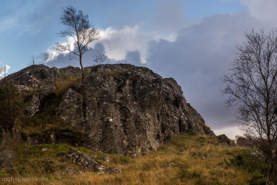 Cliff & Tree