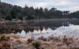 Frost_Morning_Sotra